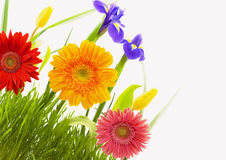 Bloemen en gras Royalty-vrije Stock Foto