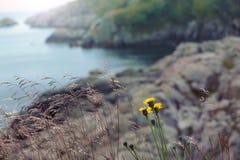 Bloemen en gras door het overzees Royalty-vrije Stock Afbeeldingen