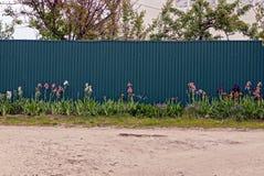 Bloemen en gras voor de groene ijzeromheining royalty-vrije stock foto's
