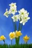 Bloemen en groen gras Stock Afbeeldingen