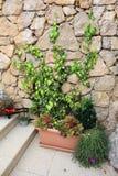 Bloemen en groene klimplantinstallatie op steenmuur stock foto's