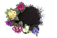 Bloemen en grond stock afbeelding