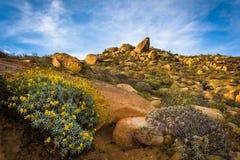Bloemen en grote rotsen bij het Park van Onderstelrubidoux royalty-vrije stock foto
