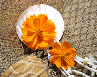 Bloemen en Halsband Stock Fotografie
