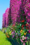 Bloemen en hemel Stock Afbeeldingen