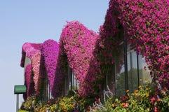 Bloemen en hemel Stock Afbeelding
