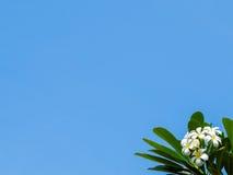 Bloemen en hemel Royalty-vrije Stock Fotografie