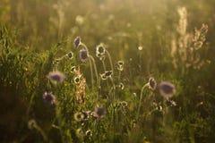 Bloemen en het gras door warme zonovergoten op een de zomerweide worden de aangestoken, vatten natuurlijke achtergronden voor uw  Royalty-vrije Stock Afbeeldingen