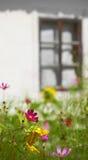 Bloemen en het venster Royalty-vrije Stock Foto