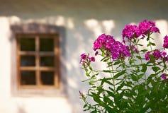 Bloemen en het venster Stock Fotografie
