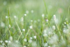 Bloemen en insecten Stock Afbeeldingen