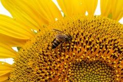 Bloemen en insecten royalty-vrije stock fotografie