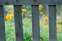 Bloemen en installaties Royalty-vrije Stock Afbeeldingen