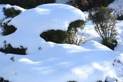 Bloemen en installaties in de sneeuw Royalty-vrije Stock Afbeeldingen