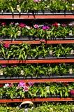 Bloemen voor verkoop royalty-vrije stock foto