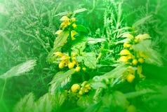 Bloemen en installaties (plantkunde) Royalty-vrije Stock Foto