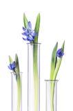 Bloemen en installaties in reageerbuizen op wit worden geïsoleerd dat Stock Fotografie