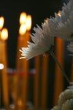 Bloemen en Kaarsen Stock Foto