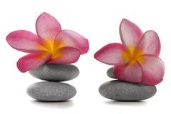 Bloemen en Kiezelstenen Stock Afbeelding
