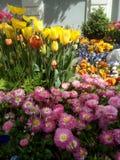 Bloemen en Kleuren stock foto's