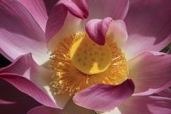 Bloemen en macroaard Stock Foto's