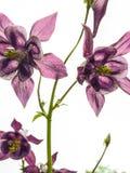 Bloemen en macroaard Stock Afbeelding