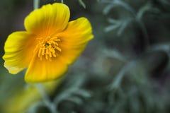 Bloemen en macroaard Royalty-vrije Stock Afbeeldingen