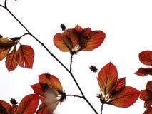 Bloemen en macroaard Stock Foto