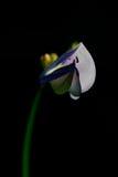 Bloemen en mieren Stock Foto's