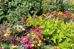 Bloemen en moestuin Stock Foto