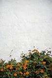 Bloemen en Muur Stock Foto