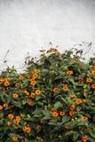 Bloemen en Muur Royalty-vrije Stock Afbeelding