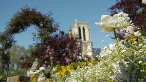 Bloemen en Notre Dame tijdens de lente Parijs, Frankrijk stock videobeelden