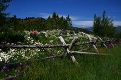 Bloemen en Omheining 2 royalty-vrije stock afbeelding
