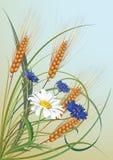 Bloemen en oren van tarwe Royalty-vrije Stock Foto's