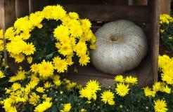 Bloemen en pompoendecoratie Stock Fotografie
