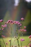 Bloemen en regenboog Stock Foto's
