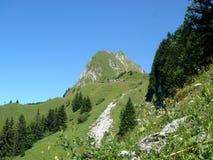 Bloemen en rots in de berg Stock Foto