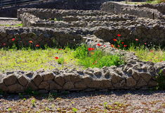 Bloemen en ruïne-Herculaneum-Italië Royalty-vrije Stock Foto's