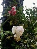 Bloemen en schoonheid royalty-vrije stock fotografie