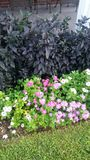 Bloemen en Sierpeper Stock Foto's