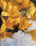 Bloemen en sneeuw stock foto