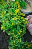 Bloemen en Stenen Stock Foto