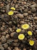 Bloemen en stenen Royalty-vrije Stock Afbeeldingen