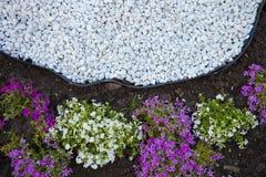 Bloemen en stenen ter plaatse Stock Foto's