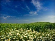 Bloemen en tarwe Stock Fotografie
