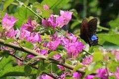 Bloemen en vlinder Stock Foto's