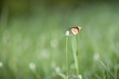 Bloemen en vlinder Royalty-vrije Stock Foto