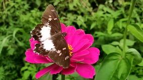 Bloemen en vlinders stock footage