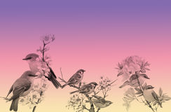 Bloemen en Vogelsachtergrond Stock Foto